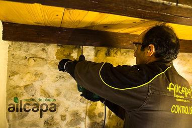 taladrando la madera para carcoma