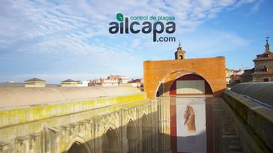 Control de aves Salamanca