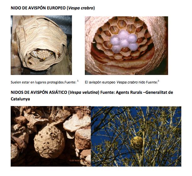 diferencia de nidos