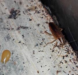 Fumigacion cucarachas salamanca