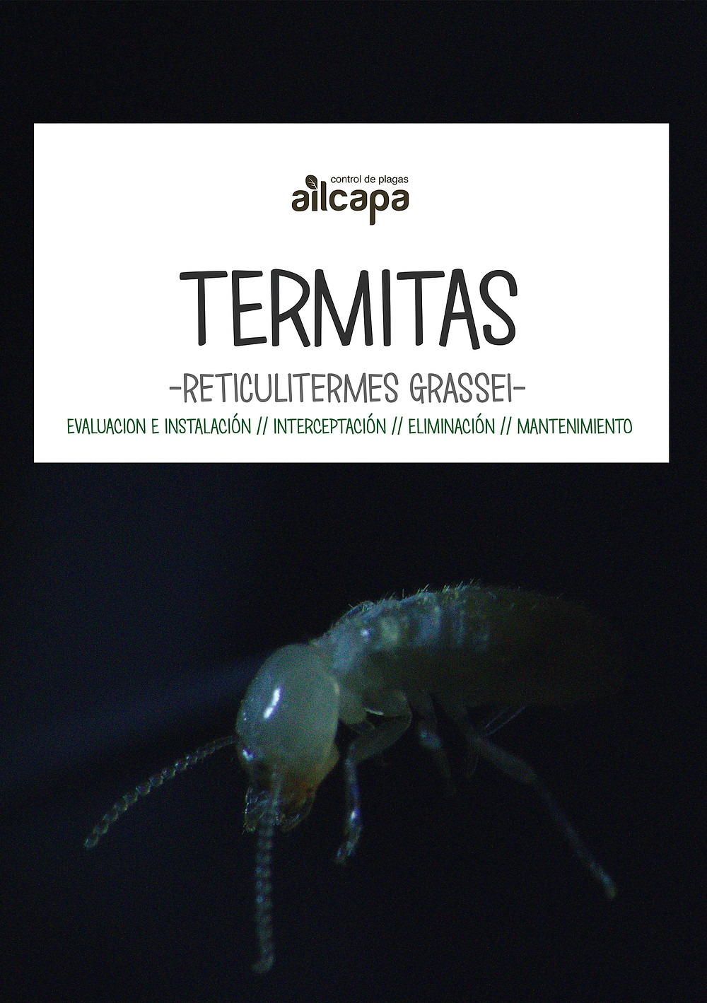 Termitas en nuestra viviendas