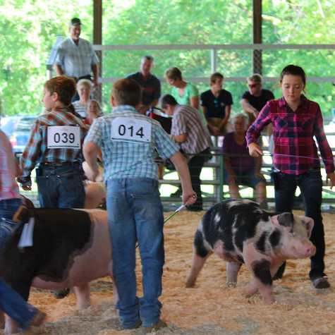 4-H at The County Fair