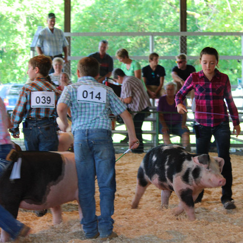 4H at The County Fair