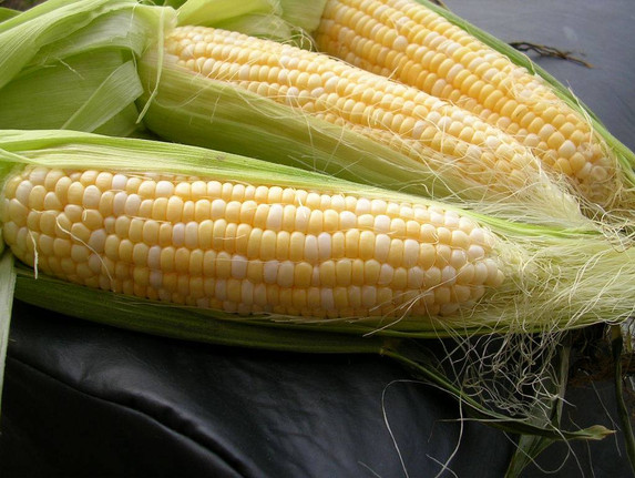 Town Square Farmers Market Corn.jpg