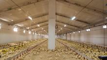 Nuevo Producto para Explotaciones Agricolas!!