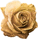 KIN ROSE 2.png