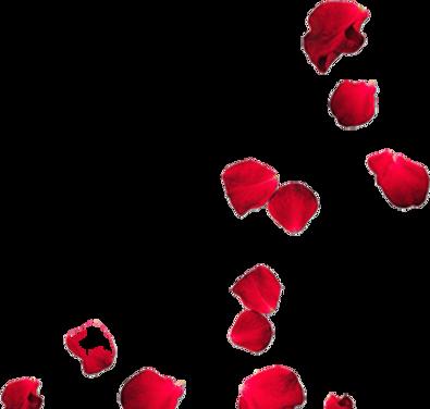 kin rose.png
