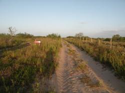 Southside ROW along fence line