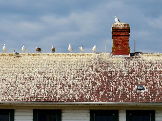 Keeper's Duplex Roof