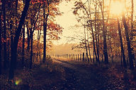 woodland-1031154_1920.jpg