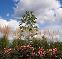 bigstockphoto_Colorful_Landscape_2031900