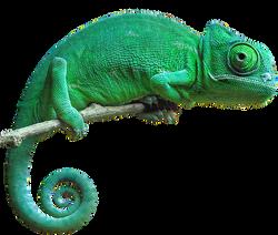 Chameleon-PNG-Pic (1) 2.PNG