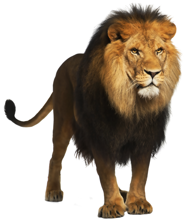 Lion-PNG-Picture (1) 2.PNG