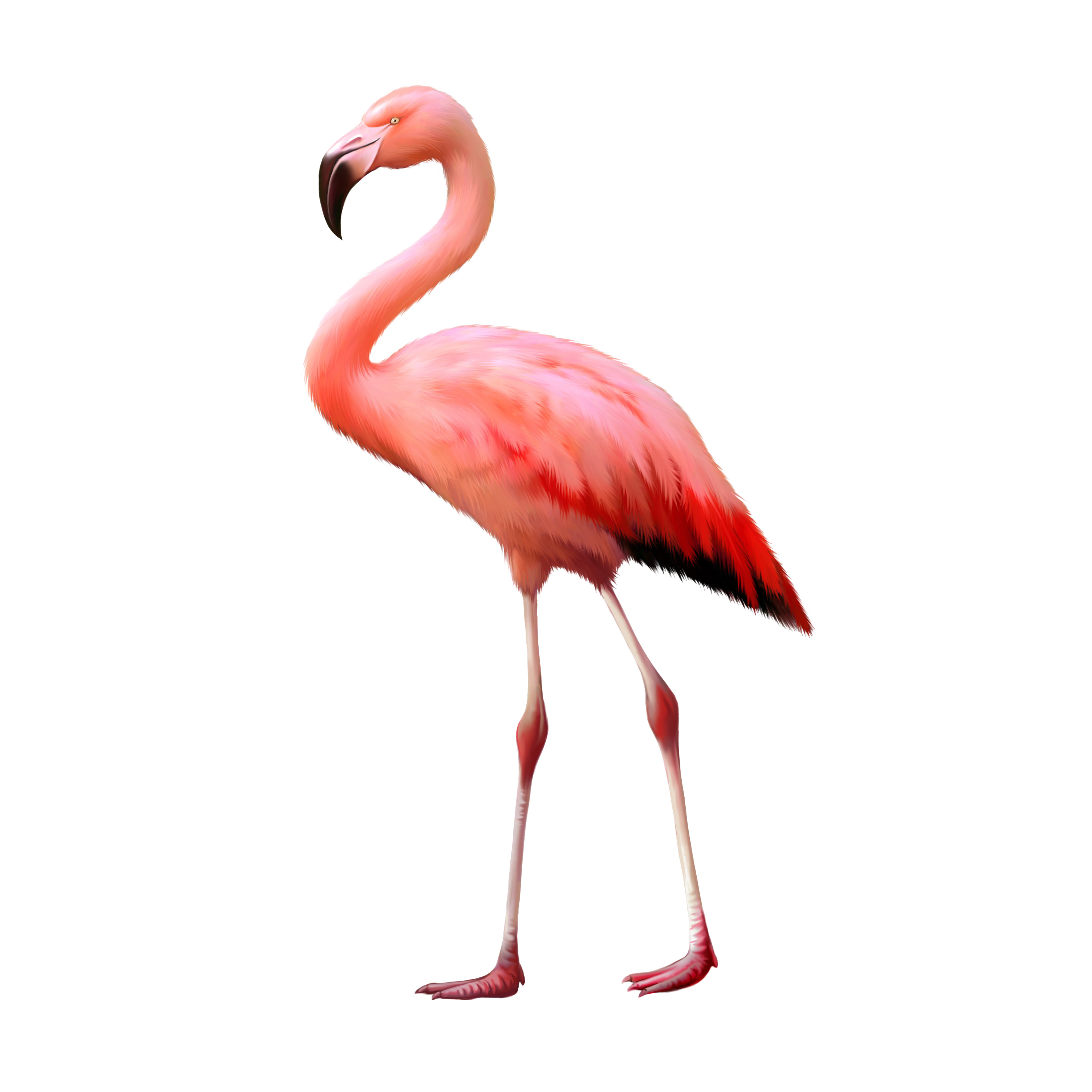 Flamingo-PNG-Background-Image (1).PNG