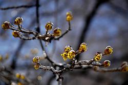 springfrost