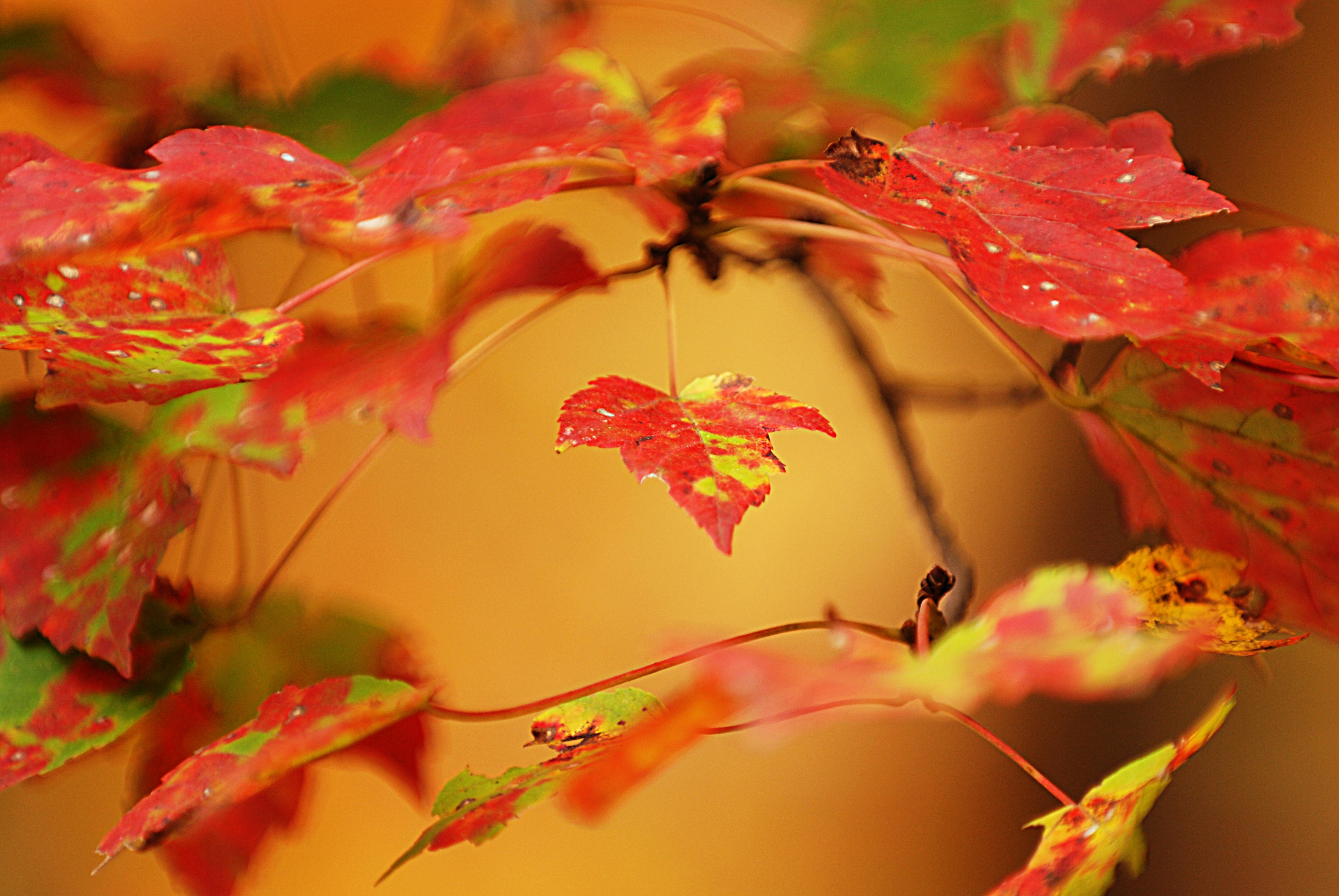 leafsurround