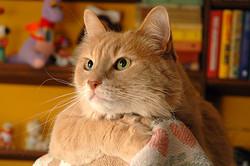 catpose
