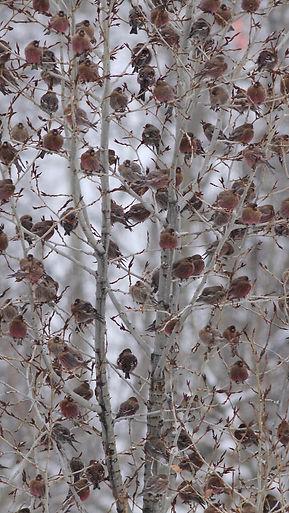 RF Flock - evenly spaces tree copy 2.jpg