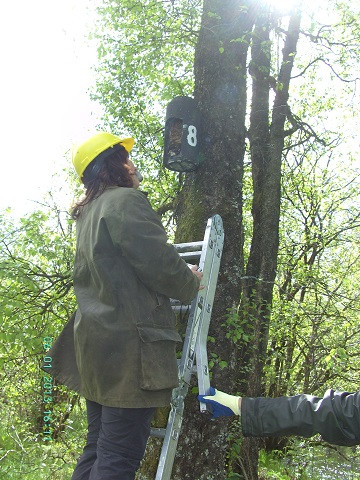 Inspect bat box up ladder.jpg