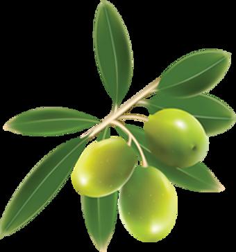 olives_PNG14327.png