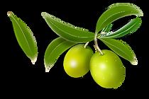 olives_PNG14292.png
