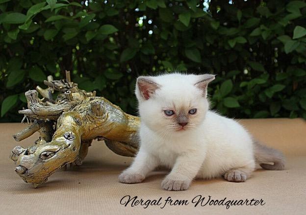 Nergal (2)