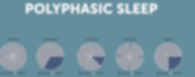 POliphasic sleep sonno.png