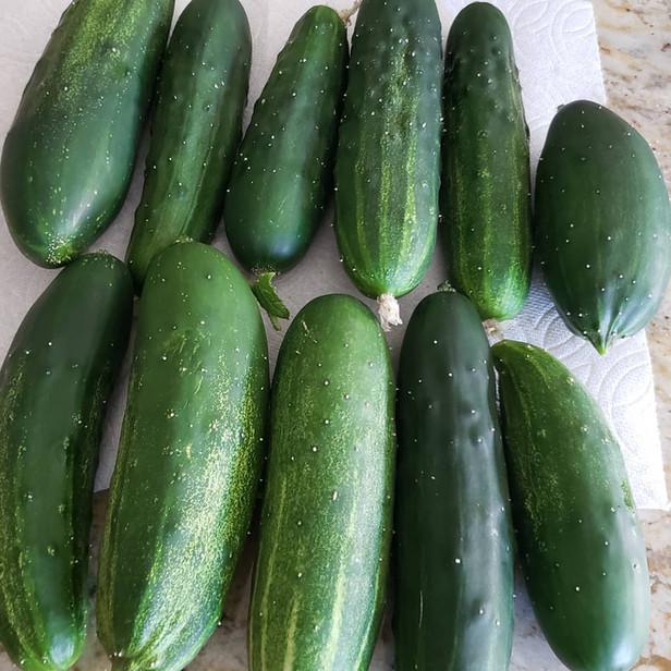 Bumper Harvest Cucumbers.jpg