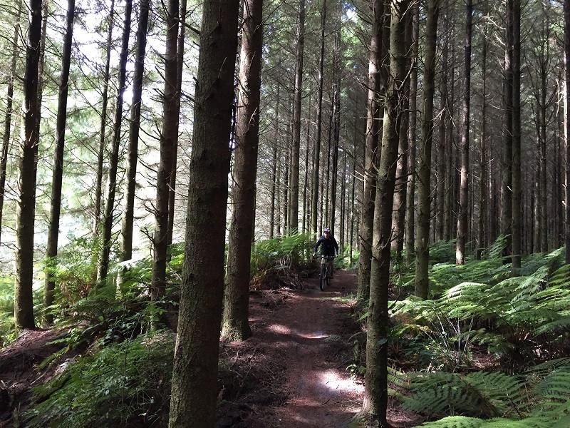mountain biking in Rotorua singletrack tours