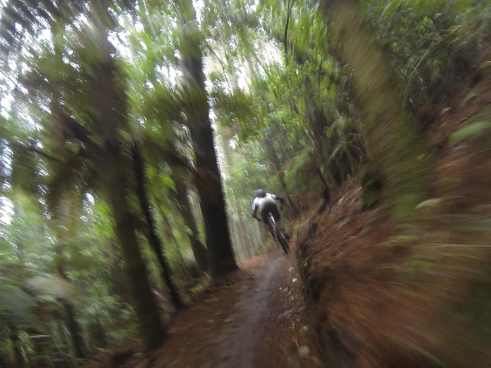 Mountain Biking In Rotorua With JustMTB