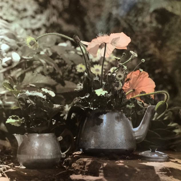 Tea Pots, 2018, Sepia toned and hand-coloured silver gelatin print
