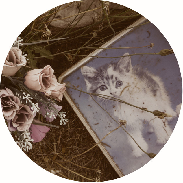 Kitty Tin & Fake Flowers, Graveside Mementos, 2018, Sepia toned and hand-coloured silver gelatin print