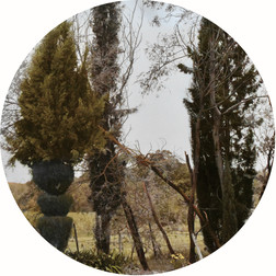 Topiary gone Wild, 2018, Sepia toned and hand-coloured silver gelatin print