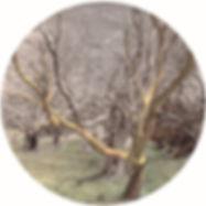 Jones Dew circle 20cm 2020.jpg