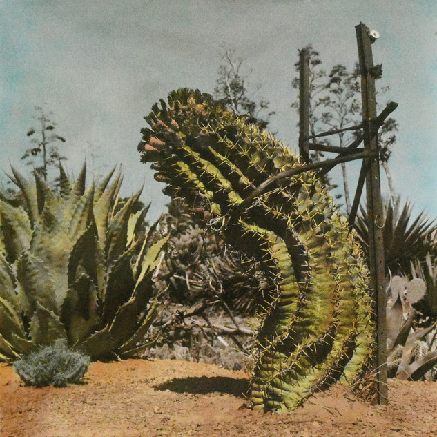 Cactus Country, 2018, Sepia toned and hand-coloured silver gelatin print
