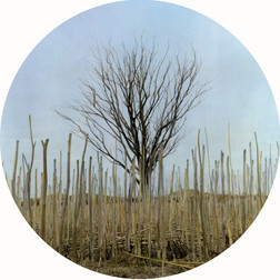 The Crop, 2018, Sepia toned and hand-coloured silver gelatin print