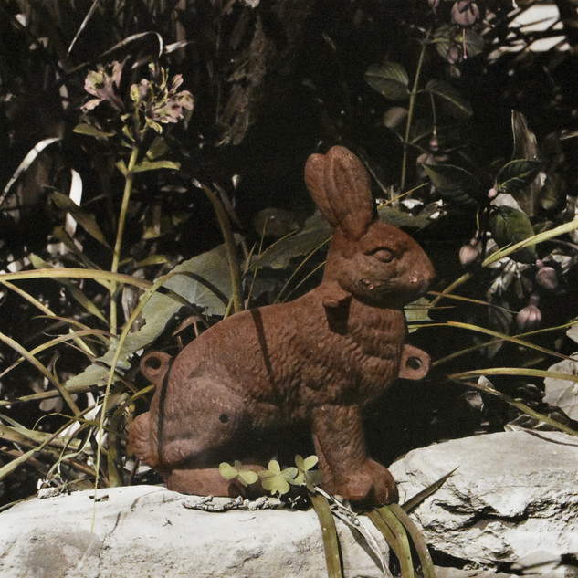 Iron Rabbit, 2018, Sepia toned and hand-coloured silver gelatin print
