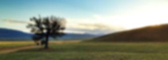Tejon RanchWeb2.jpg