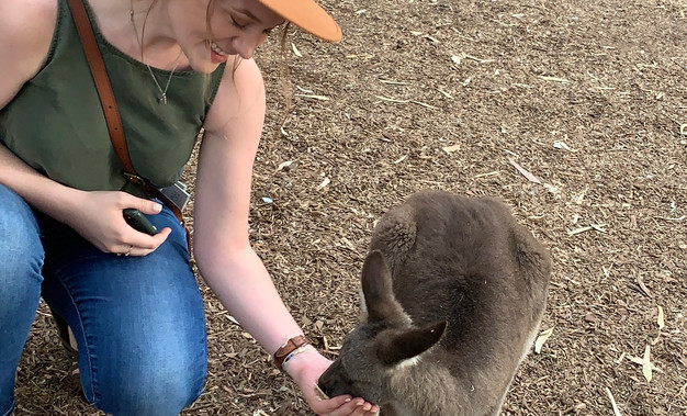 Feeding a Wallaby in Featherdale Sanctuary