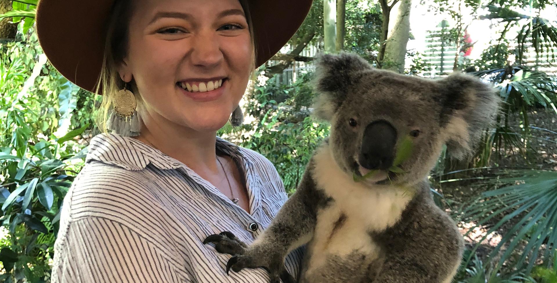 Koala, Lone Pine Sanctuary