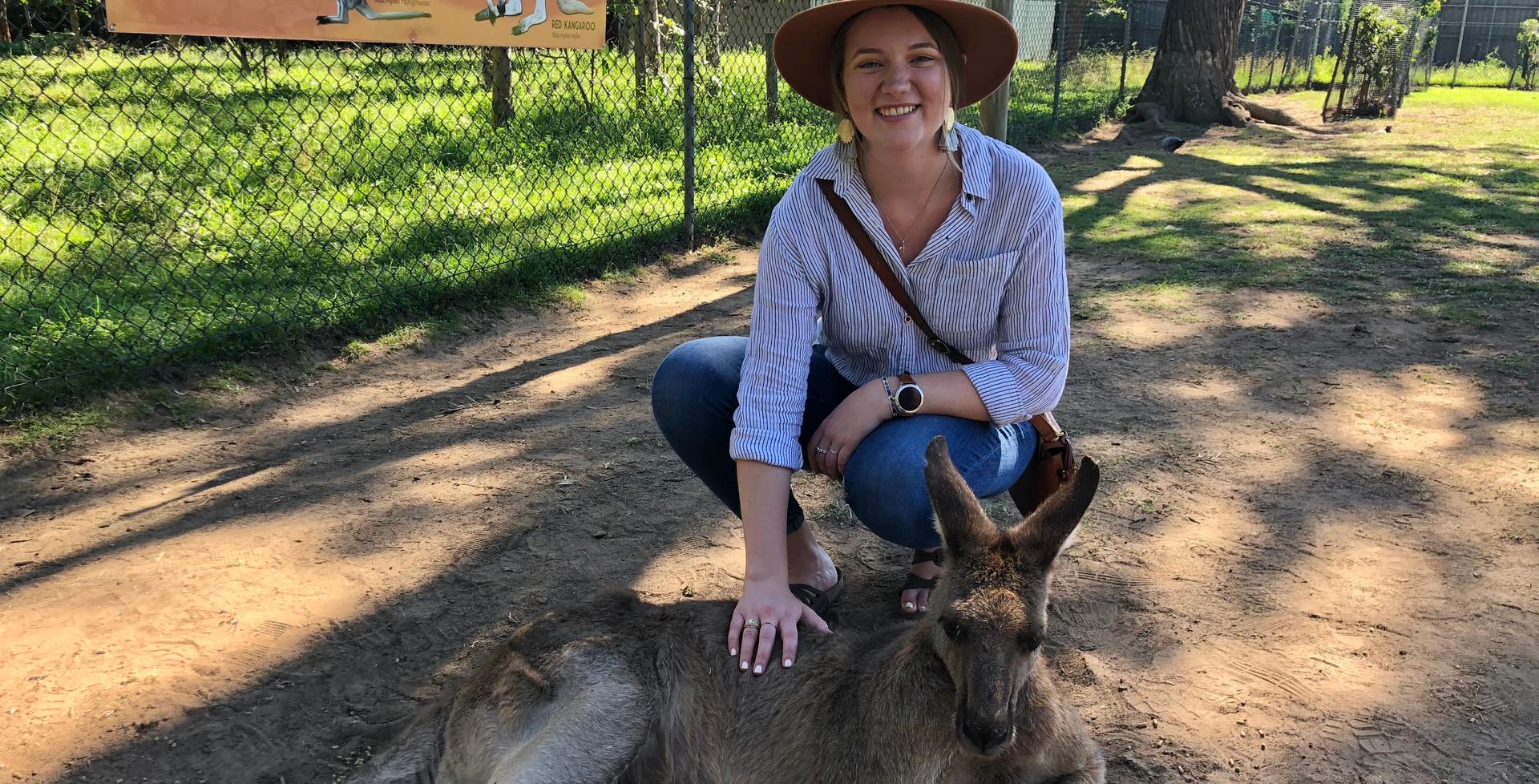 Kangaroo in Lone Pine Koala Sanctuary
