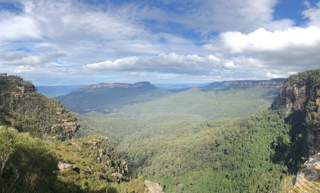 Blue Mountains, Eucalyptus Forests