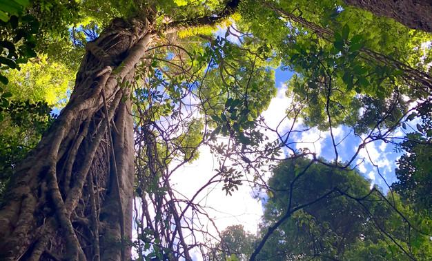 Tamborine Mountain, Lamington National Park