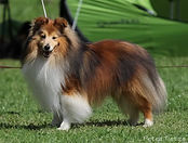 Sheepdog`s Gallery Ask For Me.jpg