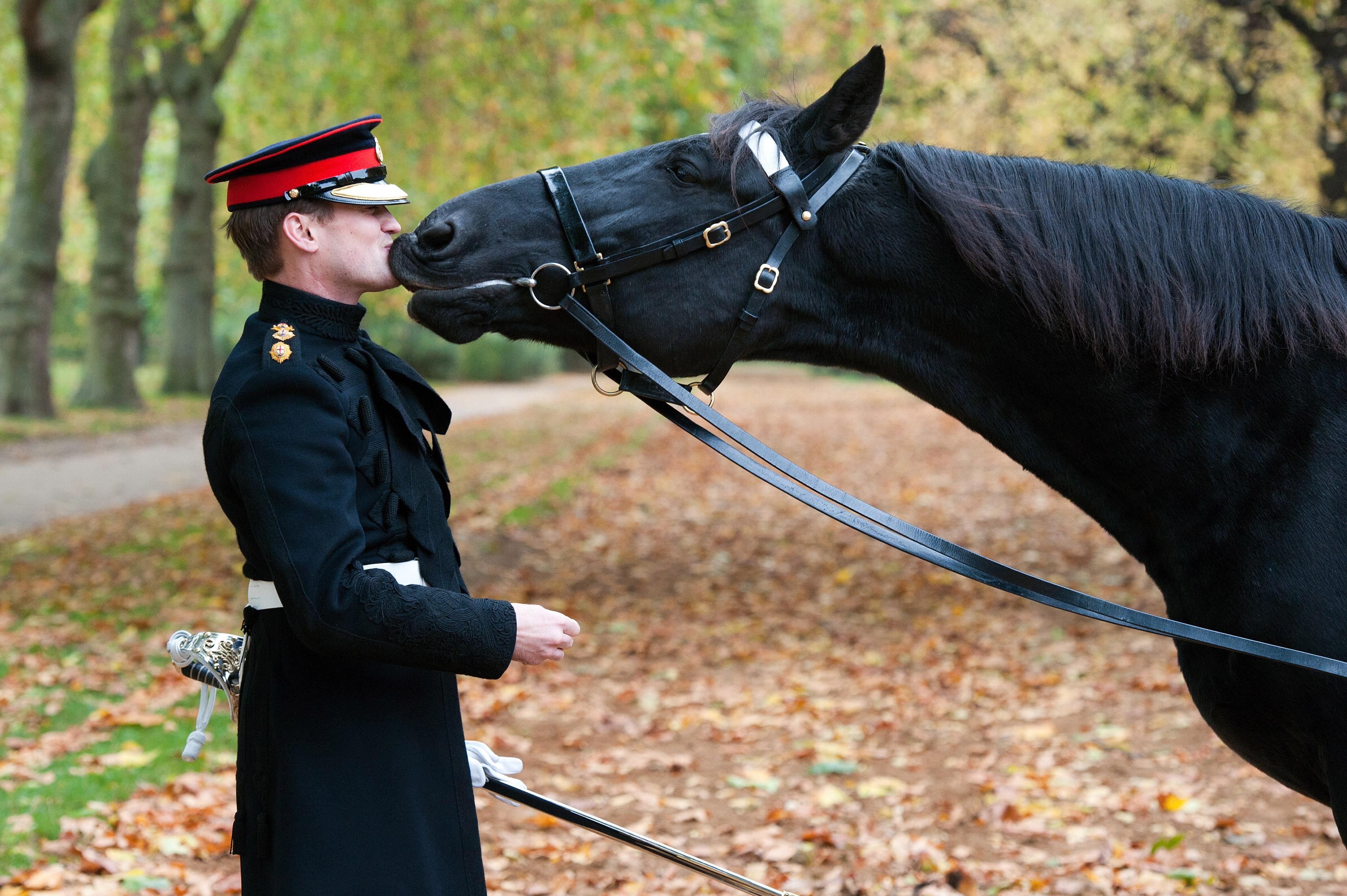 "Thomas the ""kissing"" horse"