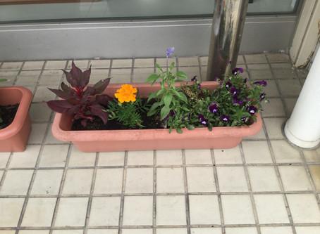 ~新しいお花♡~