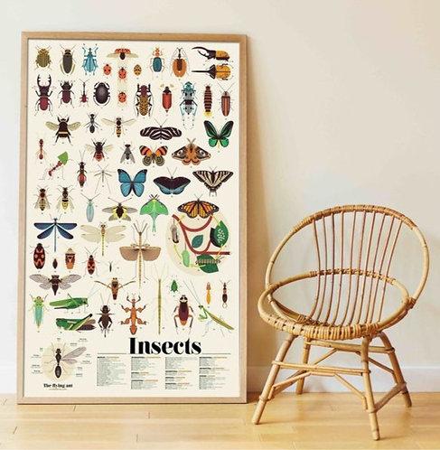 Poppik Poster en stickers Insectes
