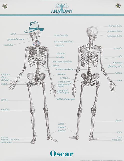 Les jolies Planches Planche Anatomie Oscar le squelette
