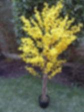 forsythia tree.JPG