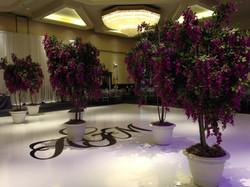 wisteria trees purple